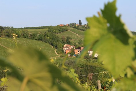 The bucolic Serraboella vineyard was the scene of fierce battles between partisans and fascists between 1943 - 1945.