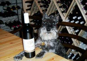 Otis the Wine Dog