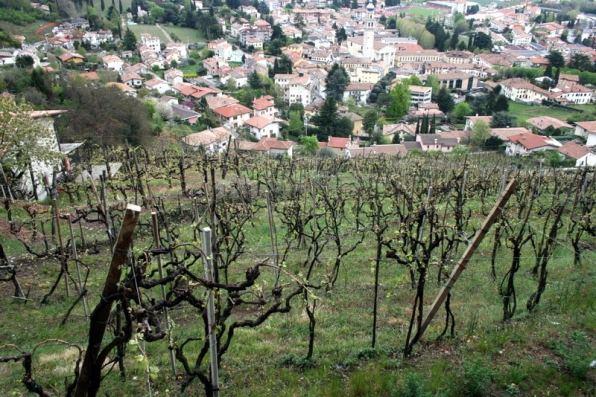 Nino Franco vineyard