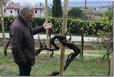 Primo Franco with very old vine