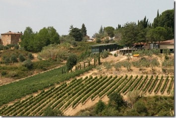 I Balzini vineyards
