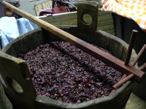 Grapes being pressed to create must.