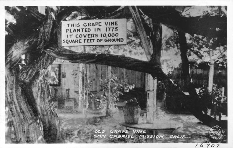 How many vines in a California Mission Vineyard in 1830?
