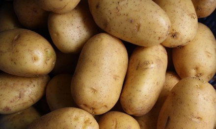 Where and When did Humans Start Eating Potatoes?