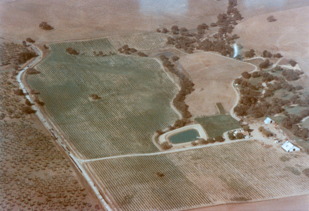 Steinbeck Vineyards, 1983-1984. The old barn is still standing.