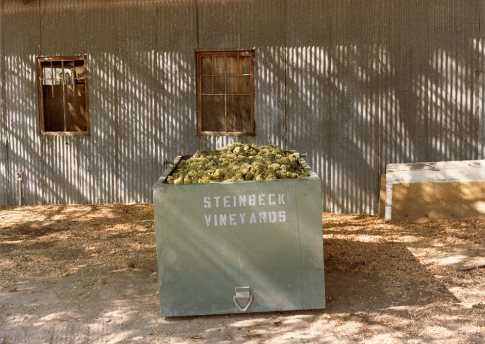 First harvest of Chardonnay, in front of old blacksmith shop, 1985.