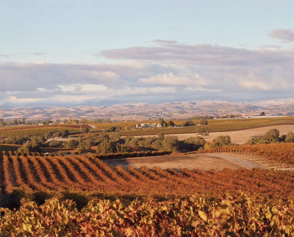 Steinbeck Vineyards, Fall 2014.