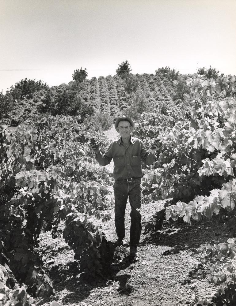 Mel Casteel standing in vineyard, 1973.