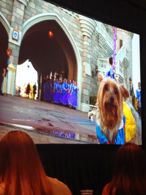Disney Side Dog's Day at Magic Kingdom
