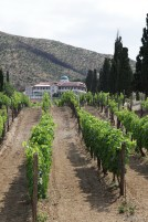 Cabernet vines welcome the guest