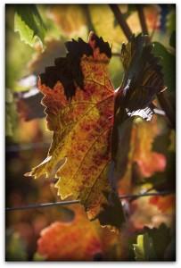 Autumn at Larkmead