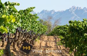 1+1=3 vineyard