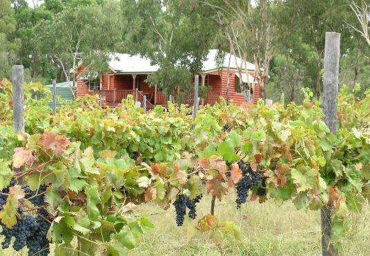 Granite Belt Winery and Vineyard for sale