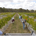 Winery for sale Beechworth