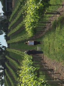Vineyard and Winery for sale Beechworth Victoria