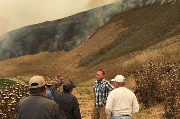 California: How Central Coast Alamo fire scorched vineyard