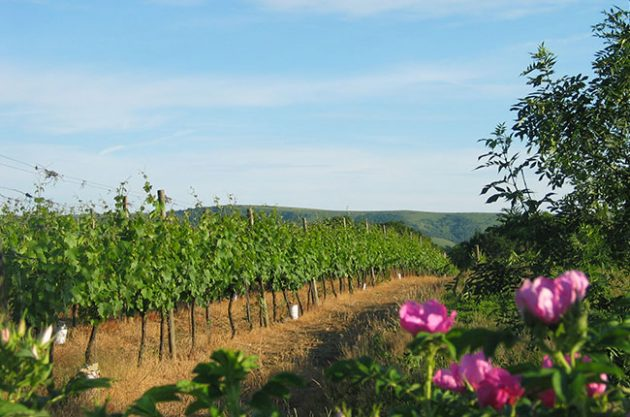 English winery revenues are rising fast, shows new data