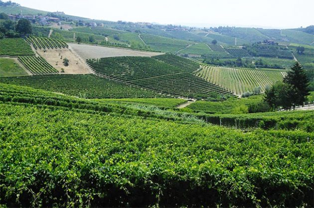Jefford on Monday: Value in the Langhe