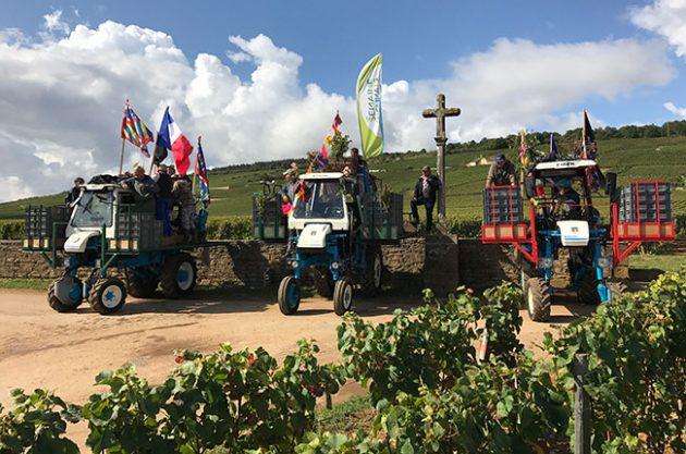 burgundy 2017 harvest