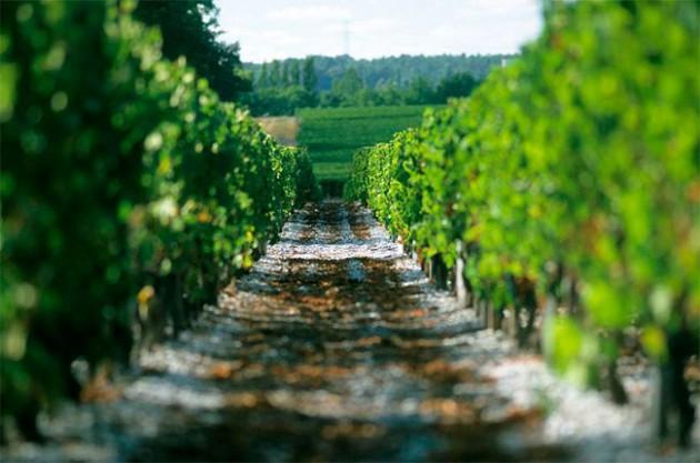 Bordeaux 2017 harvest: Picking begins in weather-hit vintage