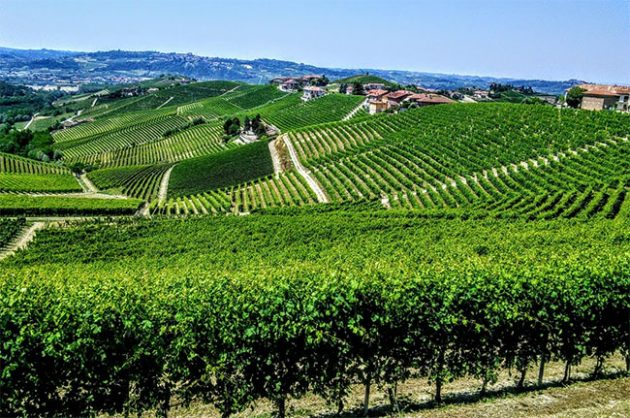 Jefford on Monday: Barbaresco – myth and reality