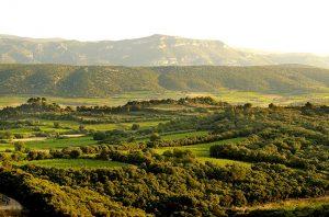 Mas de Daumas Gassac red wines: Recent vintages tasted