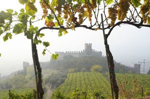 Pieropan vines