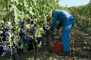 Comment: 'Non-interventionism should not mean non-winemaking'