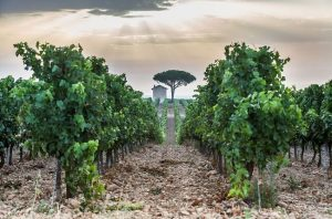 Jefford on Monday: Delta wine