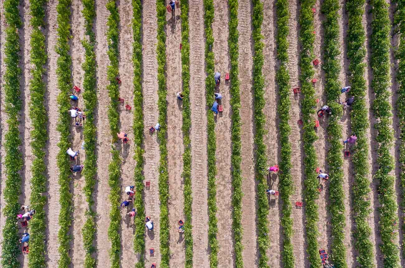 Anson: Why we need ethical fine wine