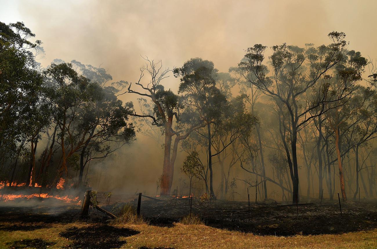 Australian grape growing season hit by heatwave and bushfires