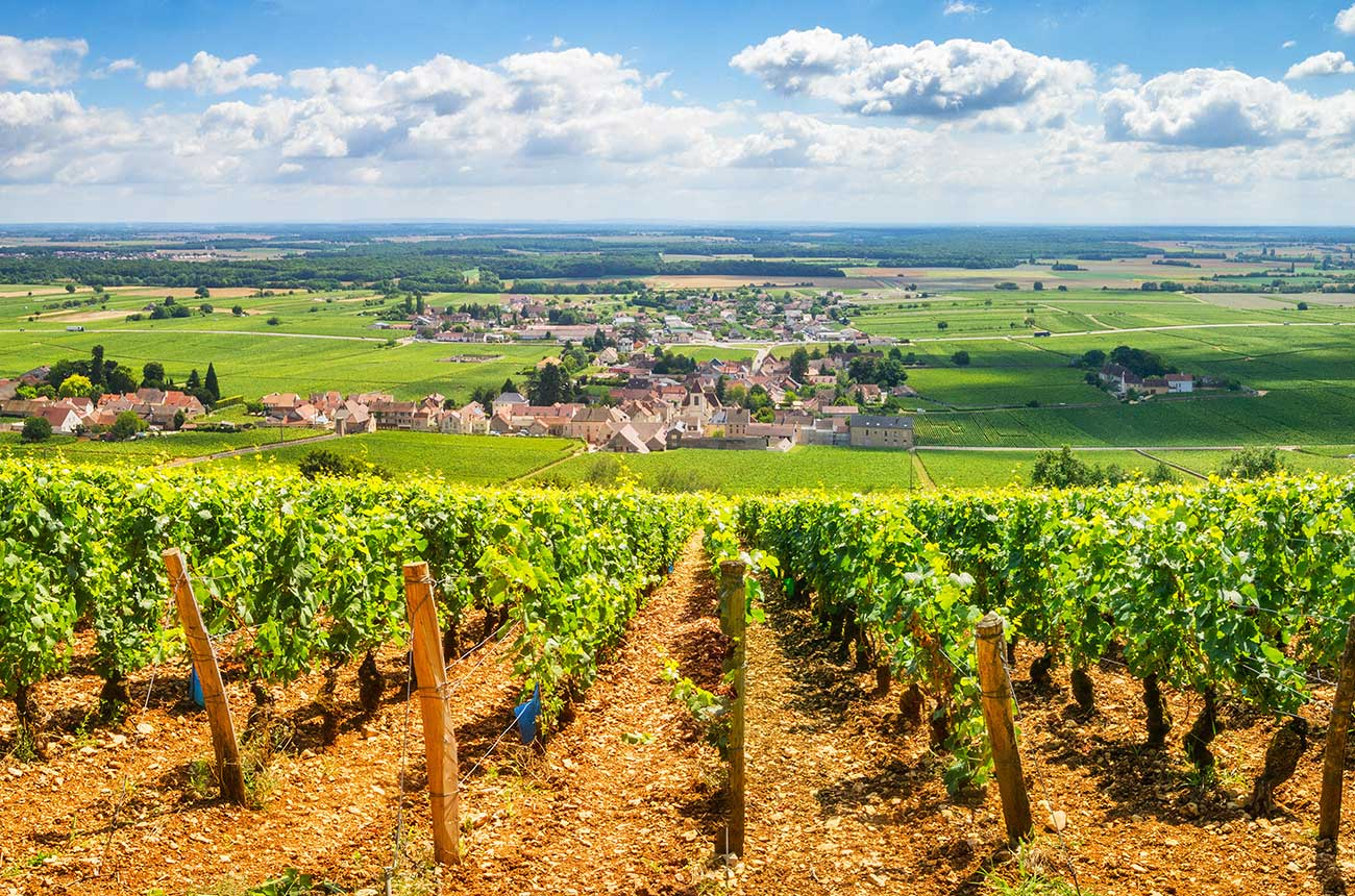 What is the new Bourgogne Côte d'Or 'appellation'?