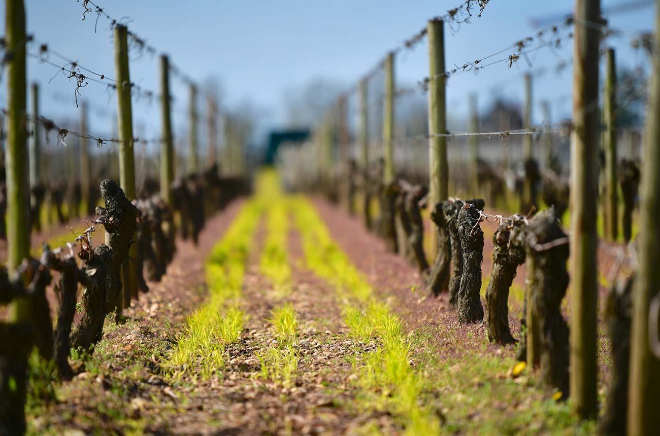 Bordeaux 2019 wines: Our en primeur verdict