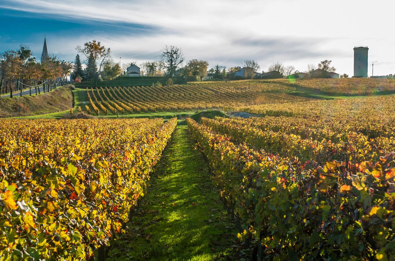 Best Pessac & Graves 2019 wines tasted en primeur