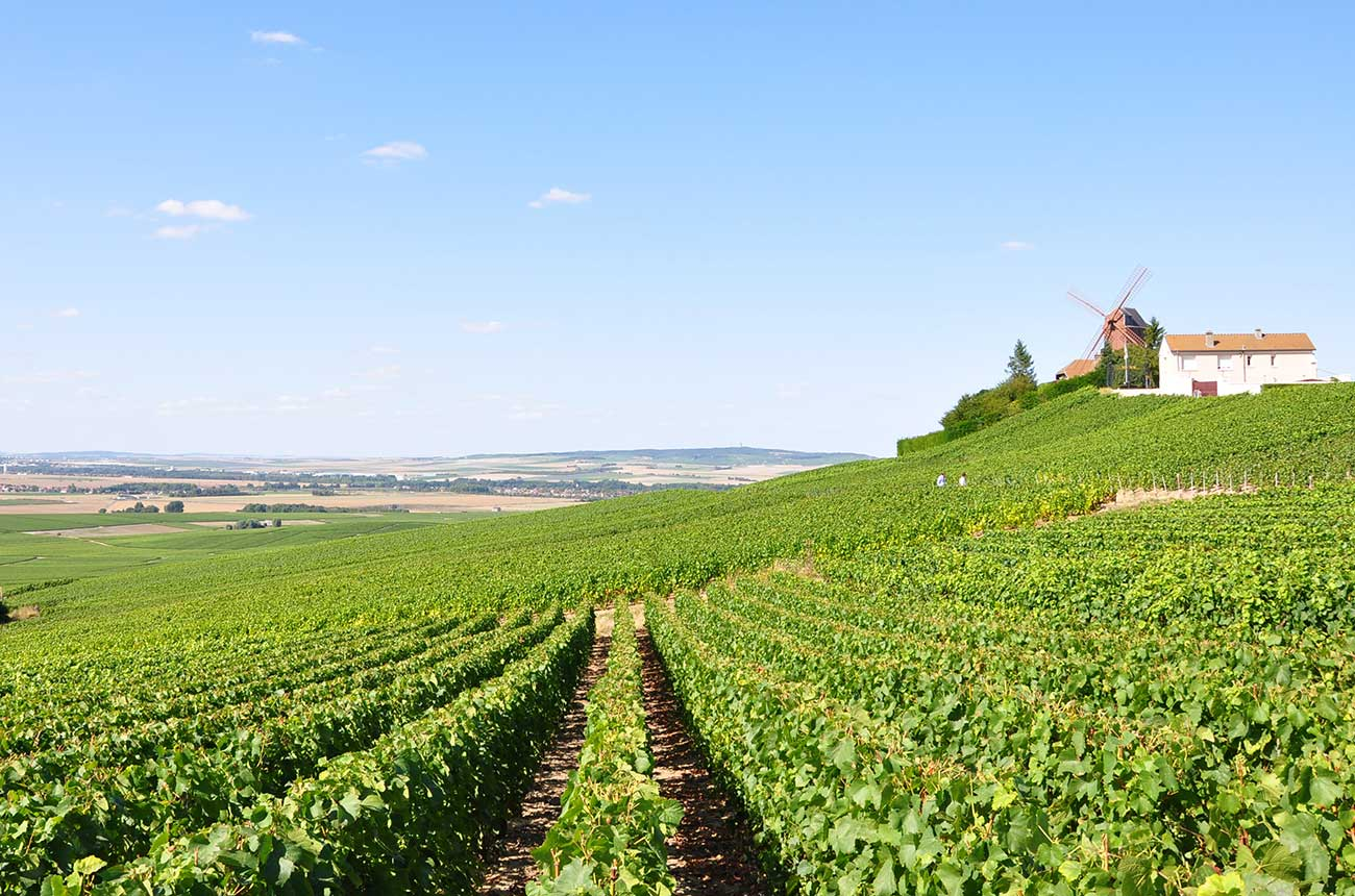 Champagne 2020 to make rare 'trilogy' of top vintages