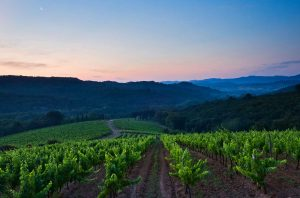 Five places to buy French vineyards on a budget