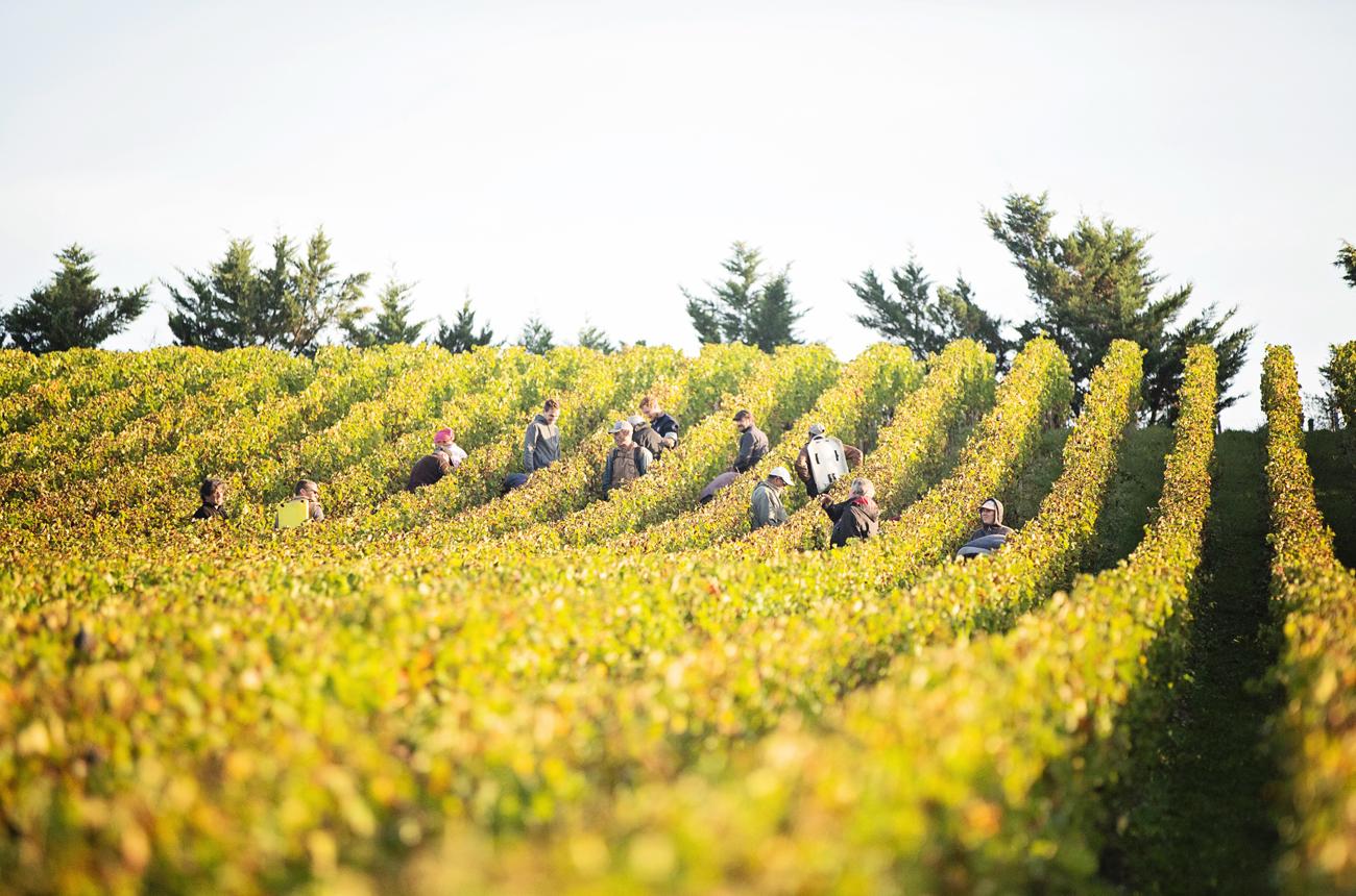 Anson: Bordeaux 2020 harvest – An insider guide