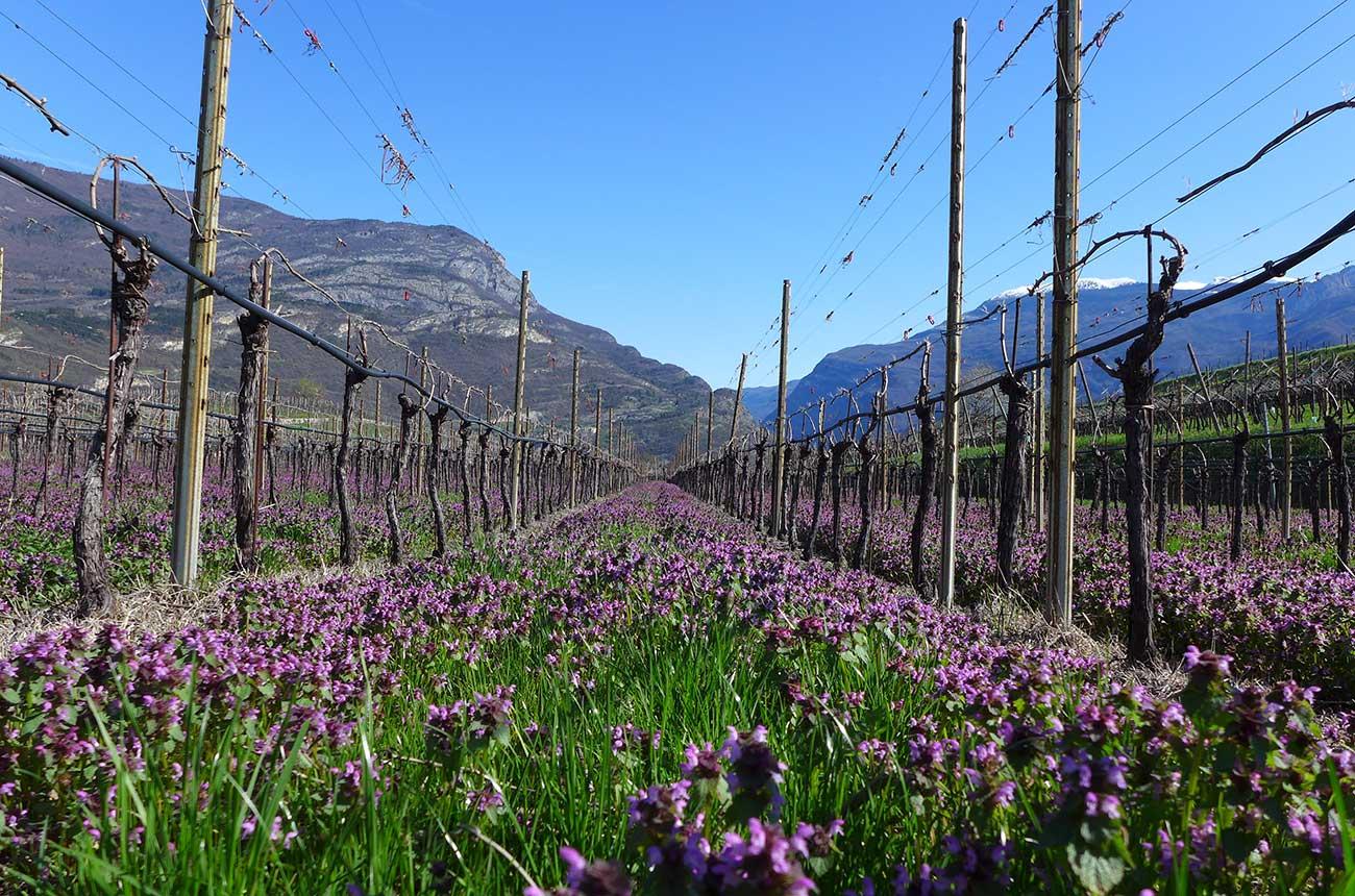 Property: Boutique Italian wine estate for sale in Trentino-Alto Adige