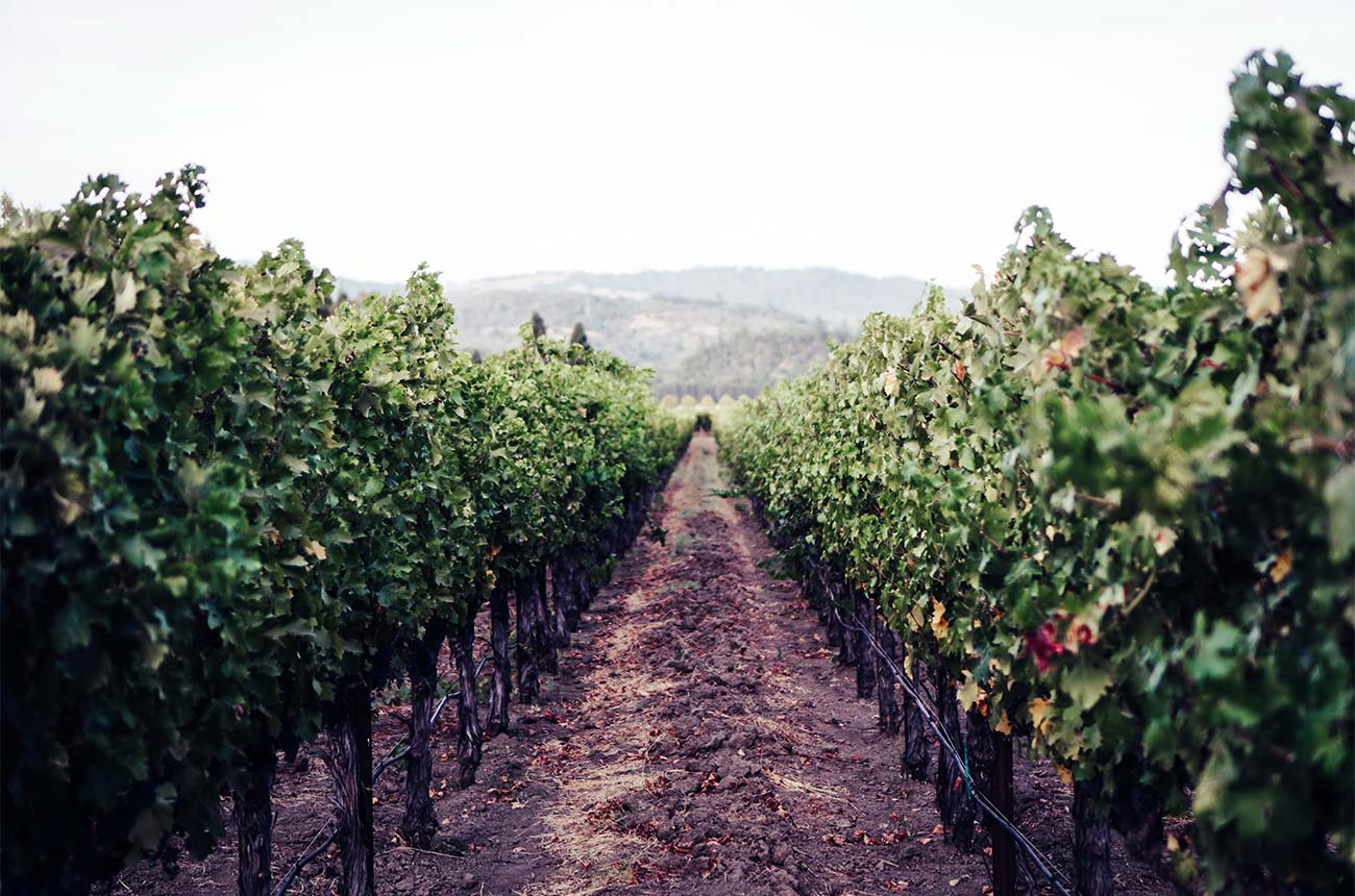 Napa tipped for fine wine market growth