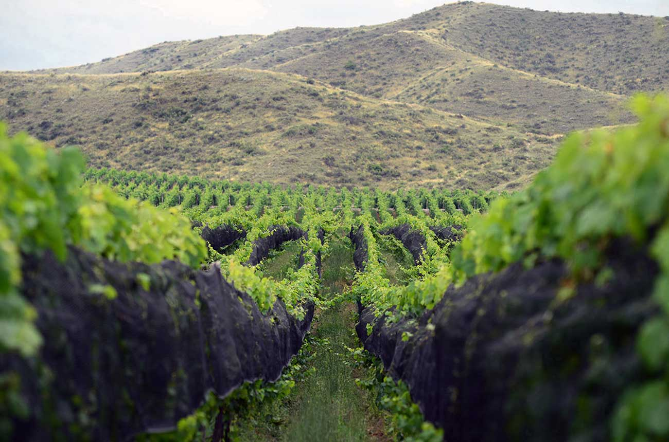 Scientists reveal Malbec terroir secrets in Mendoza