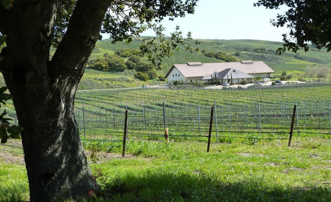 Santa-Ynez-Wine-Tours-Wine-wineries-3