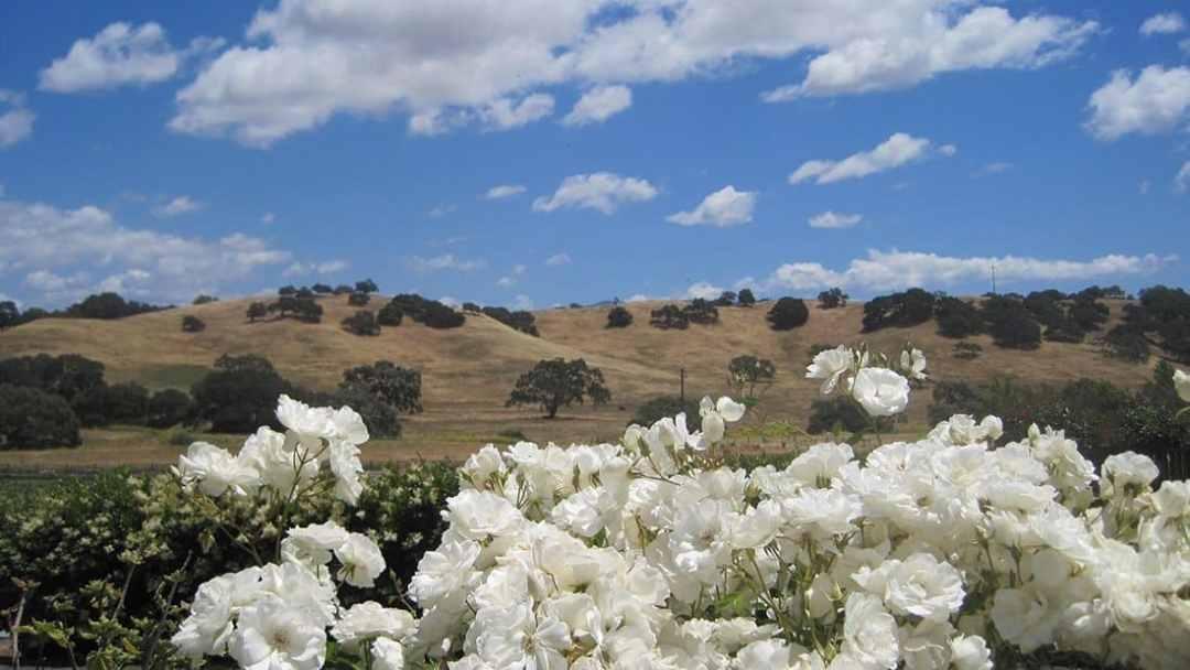 Wine Country Views