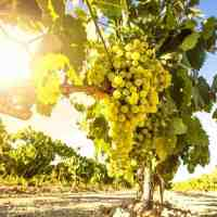 What Does Albariño Wine Taste Like? Where Is It From?