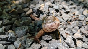 Snail running along the overlook at Highland Ridge Campground