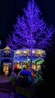 20181128 Dollywood Purple