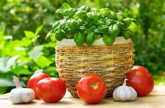 Fresh basil and tomatoes large