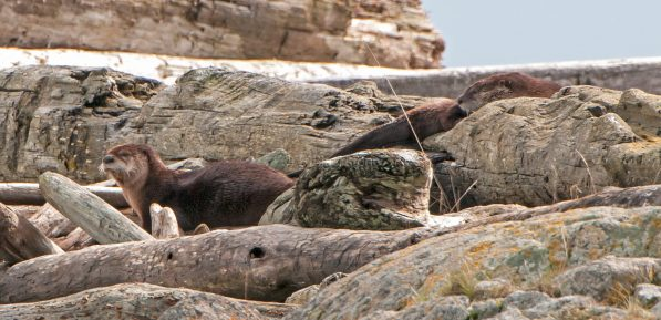March Otters12