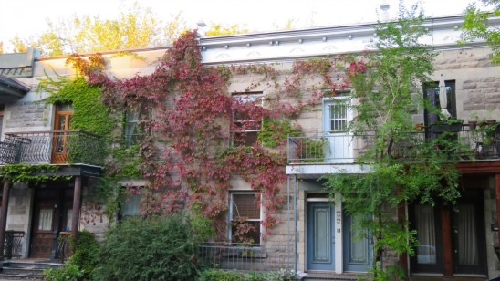 Ivy houses, Montreal