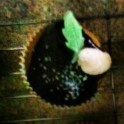 Vegan Vanilla Cupcake with Whipped Cream Filling with a Bittersweet Chocolate Ganache Garnished with a Dollop of Whipped Cream, a Fondant Leaf & Sugar