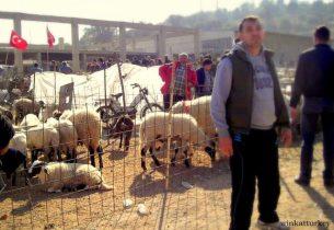 Area dedicada al ganado para sacrificar en el Bayram